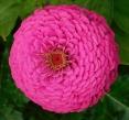 pink.cushion