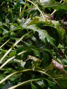 the.herbs